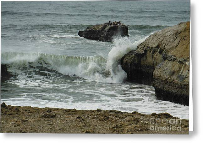 Seals In Monterey Bay Greeting Cards - Santa Cruz Waves and Seals 1 Greeting Card by Paddy Shaffer