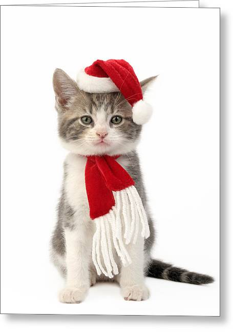 Eve Greeting Cards - Santa Kitten Greeting Card by Greg Cuddiford