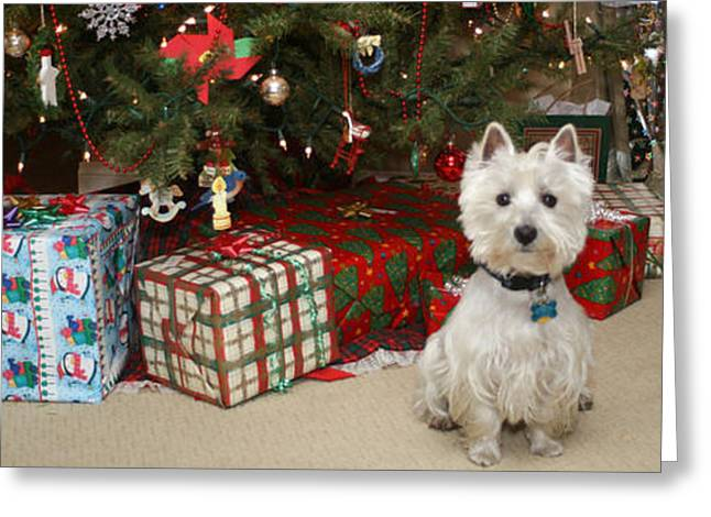 Christmas Art Greeting Cards - Santapaws The Wrapper Greeting Card by For The Love Of Art