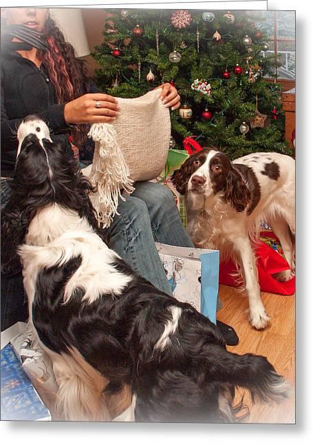 Spaniel Greeting Cards - Santas Helpers Greeting Card by Steve Harrington