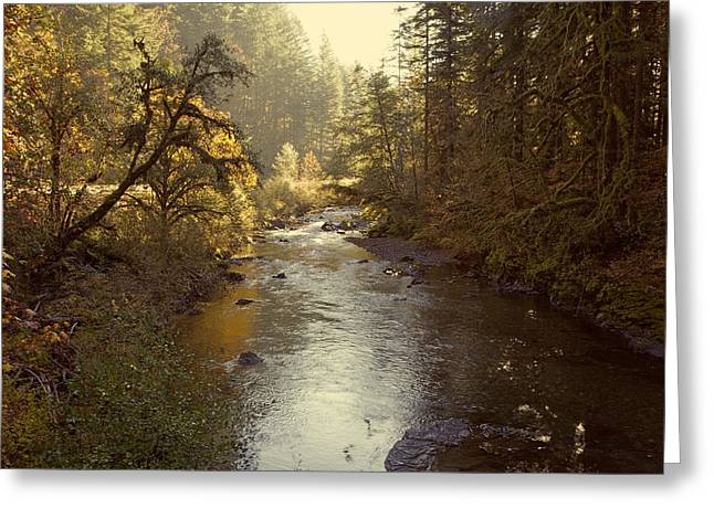 Oregon Photography Greeting Cards - Santiam River in Autumn Greeting Card by Bonnie Bruno