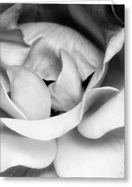 Featured Art Greeting Cards - SAPPHIRE ROSE BW Palm Springs Greeting Card by William Dey