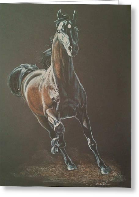 Dressage Pastels Greeting Cards - Saragos arabian horse stallion Greeting Card by Dorota Zdunska