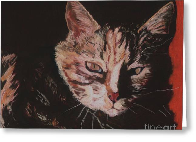 Feline Pastels Greeting Cards - Sasha Greeting Card by Pat Saunders-White