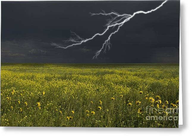 Saskatchewan Prairies Greeting Cards - Saskatchewan Prairie Lighting Greeting Card by Mark Newman