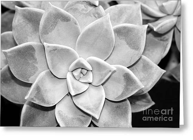 Florida Flowers Greeting Cards - Sassy Succulent Greeting Card by Sabrina L Ryan