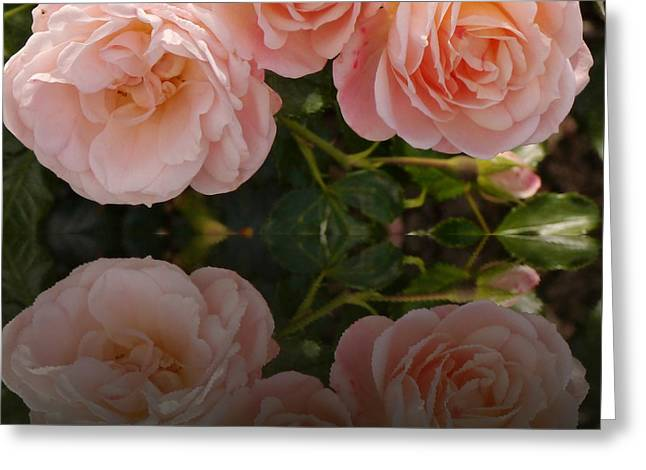 Satin Roses Greeting Card by Christiane Schulze Art And Photography