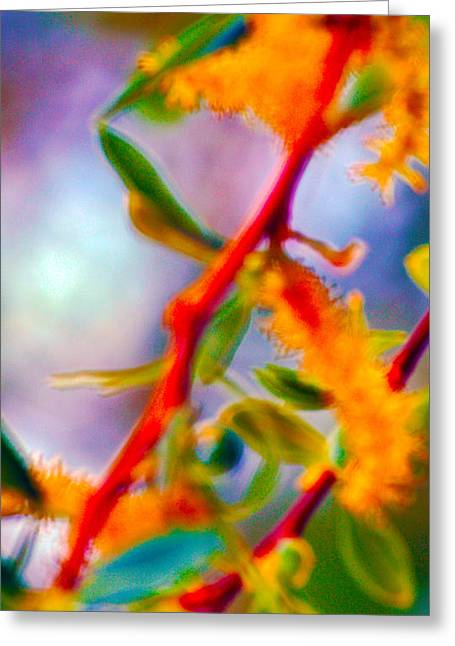Saturated  Greeting Card by Brent Dolliver