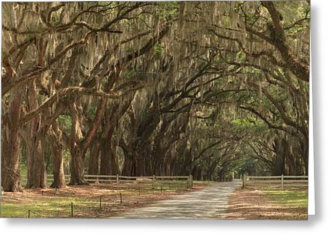 Moss Greeting Cards - Savannah Avenue Of The Oaks Panorama Greeting Card by Adam Jewell