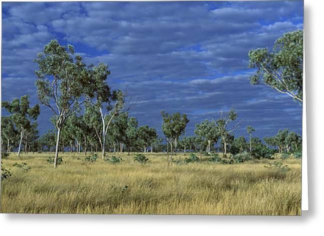 Savannah Photography Greeting Cards - Savannah Bungle Bungle Australia Greeting Card by Panoramic Images