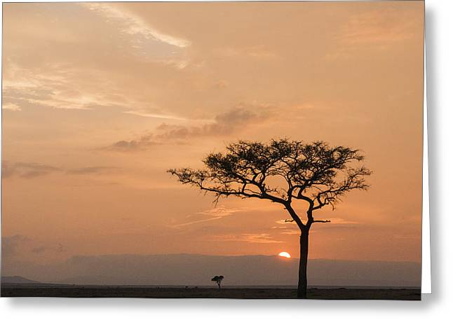 Reserve Greeting Cards - Savannah Dawn Greeting Card by Phyllis Peterson