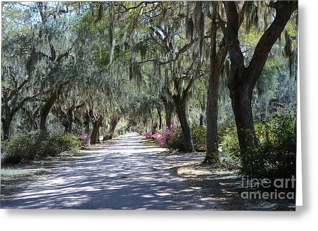Surreal Photography Greeting Cards - Savannah Georgia Gothic Cemetery Bonaventure Spanish Moss Trees - Hanging Spanish Moss Trees Greeting Card by Kathy Fornal