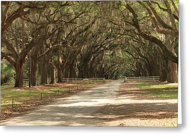 Moss Greeting Cards - Savannah Oak Drive Greeting Card by Adam Jewell