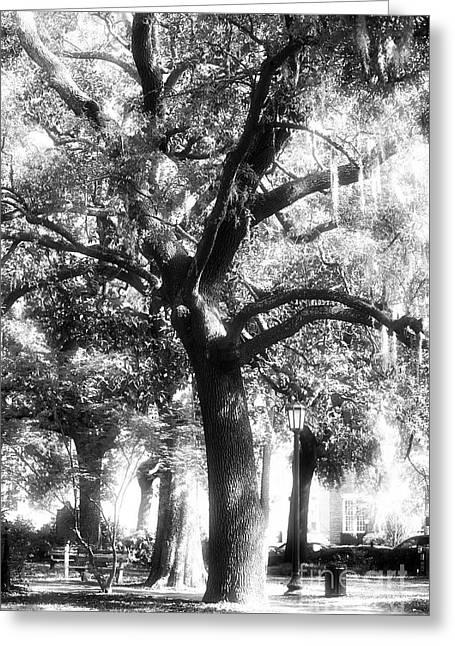 Savannah Infrared Photography Greeting Cards - Savannah Oak Greeting Card by John Rizzuto
