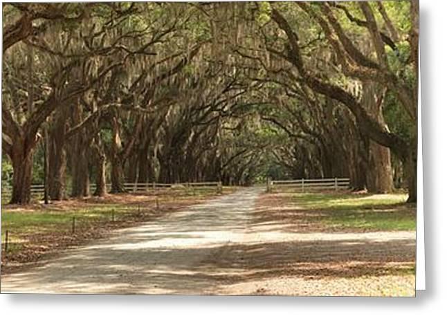 Moss Greeting Cards - Savannah Oaks Panoramic Greeting Card by Adam Jewell