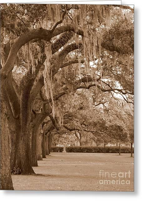 Savannahs Greeting Cards - Savannah Sepia - Emmet Park Greeting Card by Carol Groenen