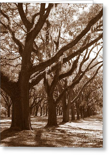 Silhouette Of Tree Greeting Cards - Savannah Sepia - Glorious Live Oaks Greeting Card by Carol Groenen