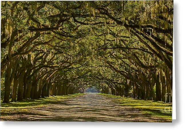 Dappled Light Greeting Cards - Savannah Wormsloe Plantation Greeting Card by Henry Kowalski