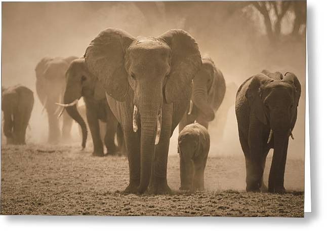 Rescue Reliefs Greeting Cards - Save the Elephants Greeting Card by Raphael  Sanzio