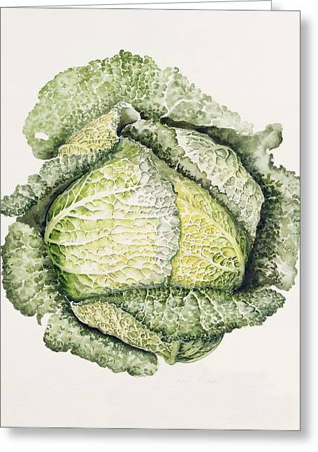 Vegetable Photographs Greeting Cards - Savoy Cabbage Wc Greeting Card by Alison Cooper