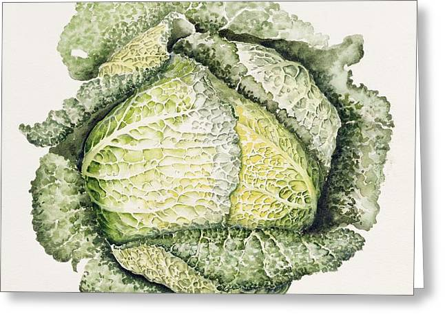 Savoy Cabbage  Greeting Card by Alison Cooper