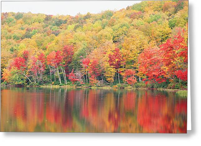 Brightly Colored Greeting Cards - Savoy Mountain State Forest Greeting Card by Panoramic Images