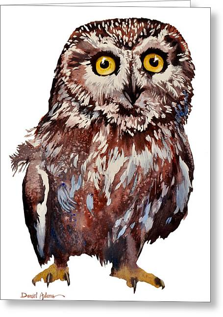 Recently Sold -  - Saw Greeting Cards - Saw Whet Owl watercolor by Artist Daniel Adams Greeting Card by Daniel  Adams