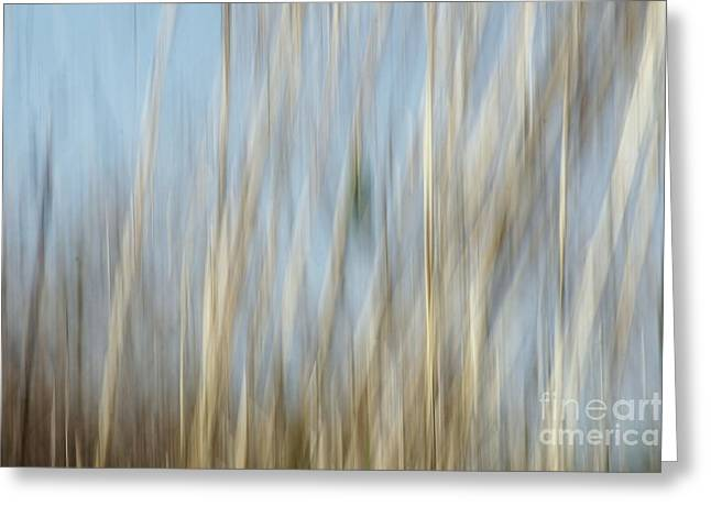 Ecru And Brown Greeting Cards - Sawgrass in Motion Greeting Card by Benanne Stiens