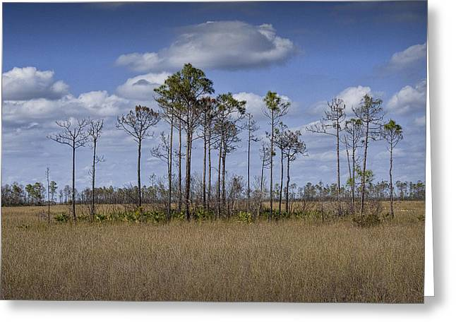 Randy Greeting Cards - Sawgrass Marsh in the Everglades No. 0143 Greeting Card by Randall Nyhof