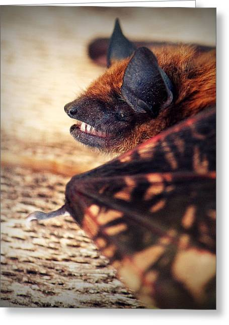 Melanie Lankford Photography Greeting Cards - Say Cheese Greeting Card by Melanie Lankford Photography