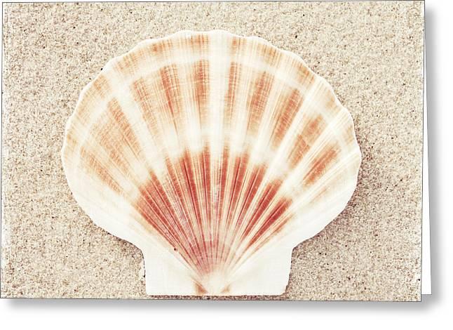Scallop Shell Greeting Card by Carolyn Cochrane