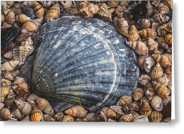 Scallop Shell Greeting Card by Marco Oliveira