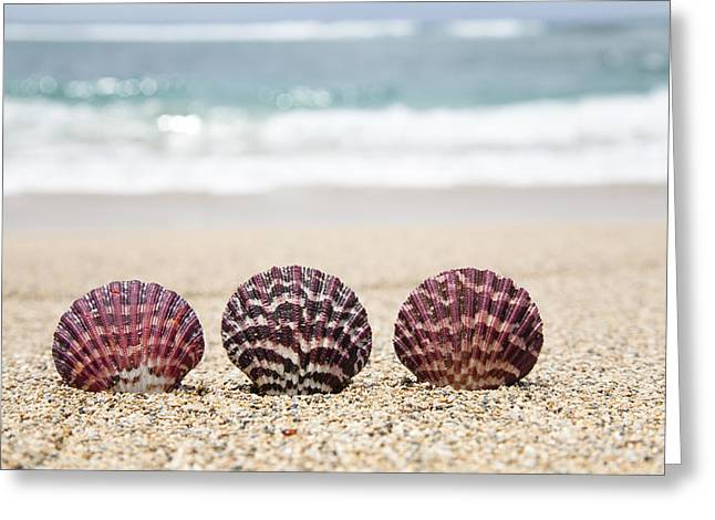 Sand Patterns Greeting Cards - Scallop Shells on Beach Greeting Card by Brandon Tabiolo
