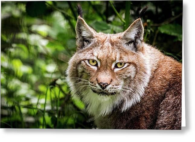 Scandinavian Lynx Greeting Card by Paul Williams