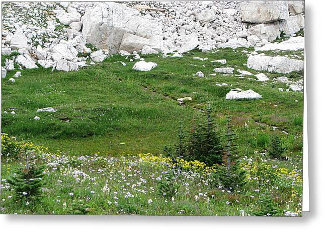 Scapegoat Greeting Cards - Scapegoat Amphitheater Greeting Card by Pam Little