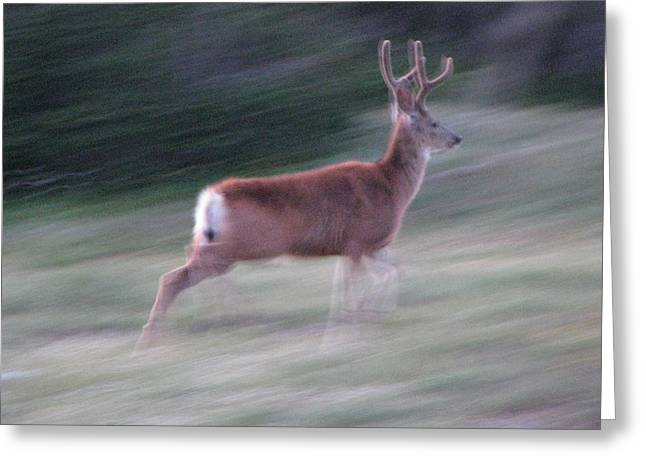 Scapegoat Greeting Cards - Scapegoat Deer Running Greeting Card by Pam Little