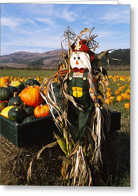 Scarecrow Greeting Cards - Scarecrow In Pumpkin Patch, Half Moon Greeting Card by Panoramic Images