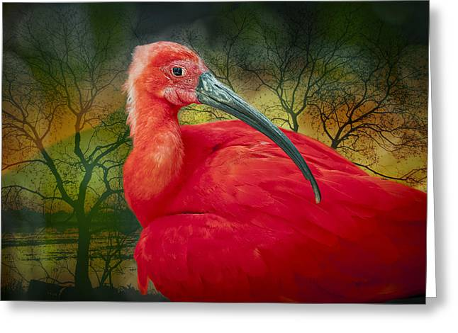 Ibis Greeting Cards - Scarlet Ibis Greeting Card by Bonnie Barry