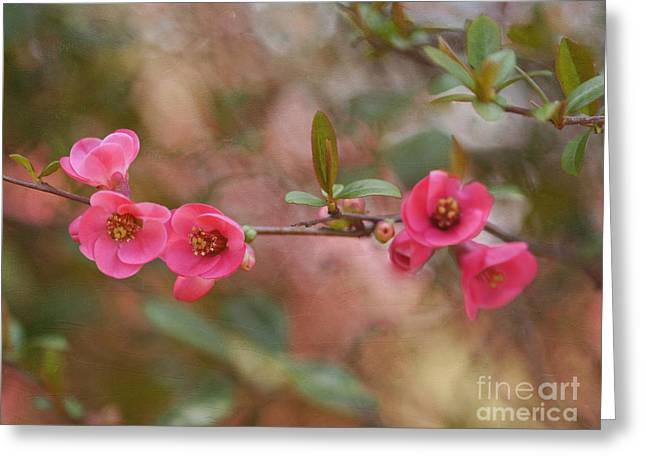 Quince Greeting Cards - Scarlet Greeting Card by Irina Wardas