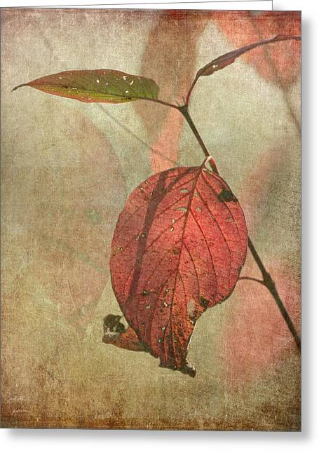 Colors Of Autumn Greeting Cards - Scarlet Leaf Greeting Card by Angie Vogel