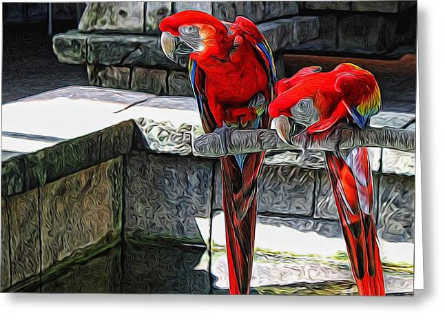 Decorate Greeting Cards - Scarlet Macaws Painted Greeting Card by Judy Vincent
