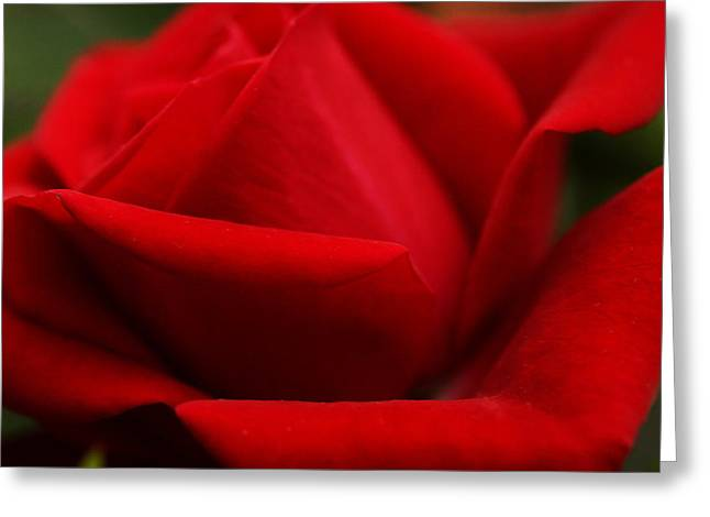 Womanly Greeting Cards - Soft Scarlet Sizzle Greeting Card by Connie Handscomb