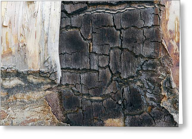 White Photographs Greeting Cards - Scarred For Life Greeting Card by Keith Espeland