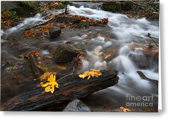 Scattered Gold Greeting Card by Mike Dawson
