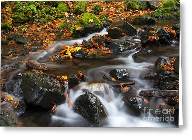 Starvation Greeting Cards - Scattered Seasons Greeting Card by Mike Dawson