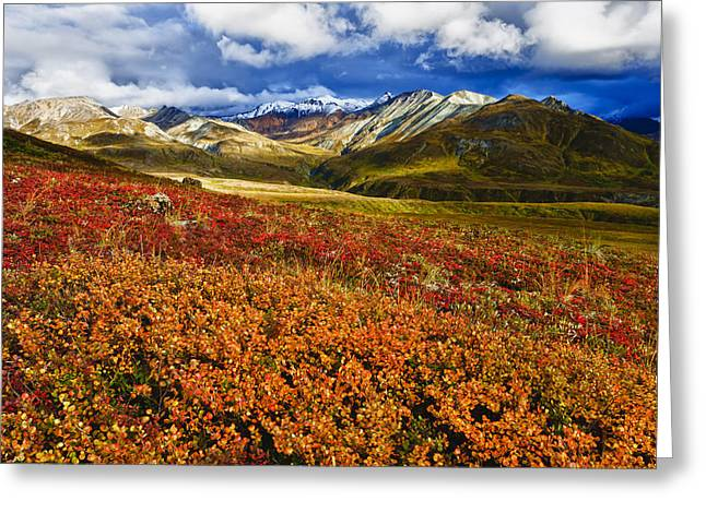 Hdr Landscape Greeting Cards - Scenic Autumn View Of Colorful Tundra Greeting Card by Michael DeYoung