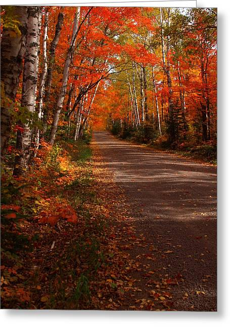 Paradise Road Greeting Cards - Scenic Maple Drive Greeting Card by James Peterson