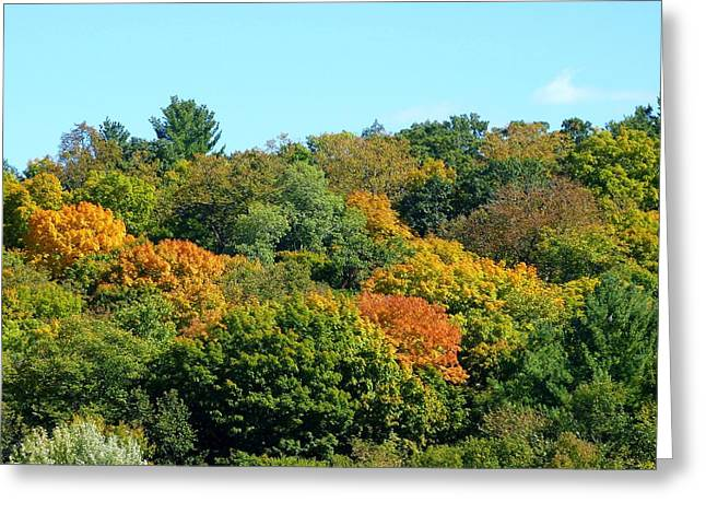Early Autumn Greeting Cards - Scenic Minnesota 5 Greeting Card by Will Borden