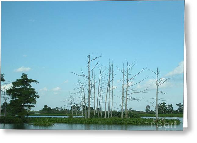 Lilly Pad Greeting Cards - Scenic Swamp Cypress Trees Greeting Card by Joseph Baril