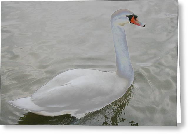 Stephen Melcher Greeting Cards - Scenic Swan Greeting Card by Stephen Melcher